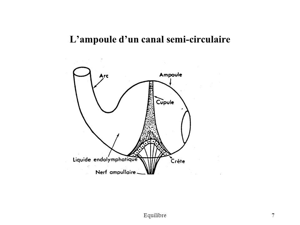 Equilibre8 Fonction : Les canaux semi-circulaires décèlent les mouvements de rotation : linertie de lendolymphe par rapport à la paroi modification de la cupule au niveau de lampoule dans le plan du canal.