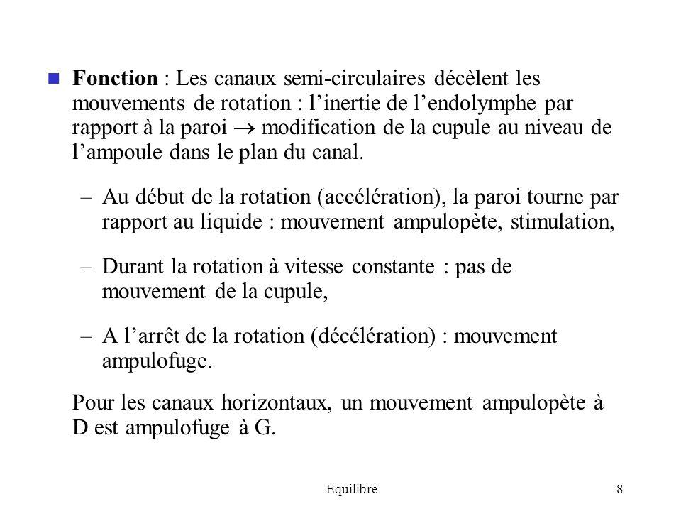 Equilibre9 En pratique, la plupart des mouvements naturels associent accélérations angulaires et linéaires de la tête stimulation des canaux semi-circulaires + utricule + saccule.