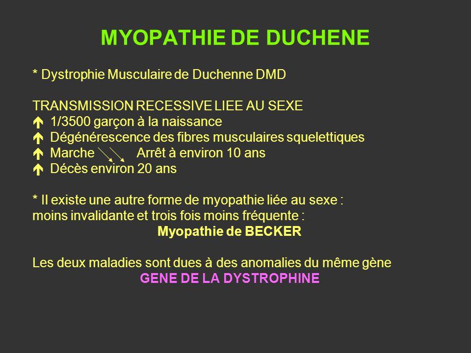 MYOPATHIE DE DUCHENE * Dystrophie Musculaire de Duchenne DMD TRANSMISSION RECESSIVE LIEE AU SEXE é1/3500 garçon à la naissance éDégénérescence des fib