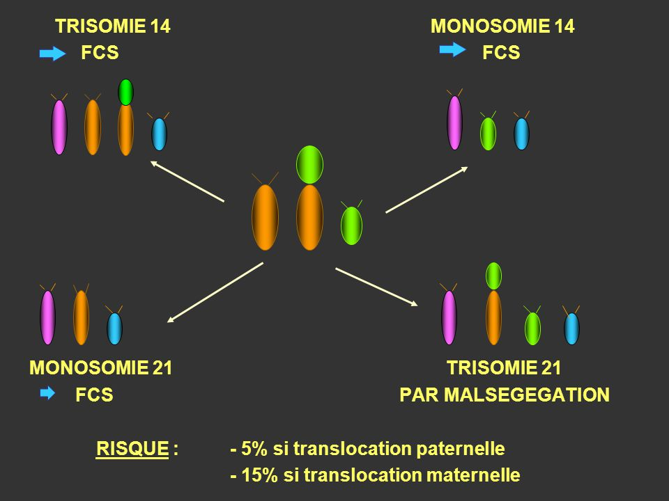 TRISOMIE 14MONOSOMIE 14 FCS MONOSOMIE 21 TRISOMIE 21 FCS PAR MALSEGEGATION RISQUE :- 5% si translocation paternelle - 15% si translocation maternelle