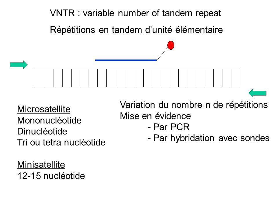 VNTR : variable number of tandem repeat Répétitions en tandem dunité élémentaire Microsatellite Mononucléotide Dinucléotide Tri ou tetra nucléotide Minisatellite 12-15 nucléotide Variation du nombre n de répétitions Mise en évidence - Par PCR - Par hybridation avec sondes