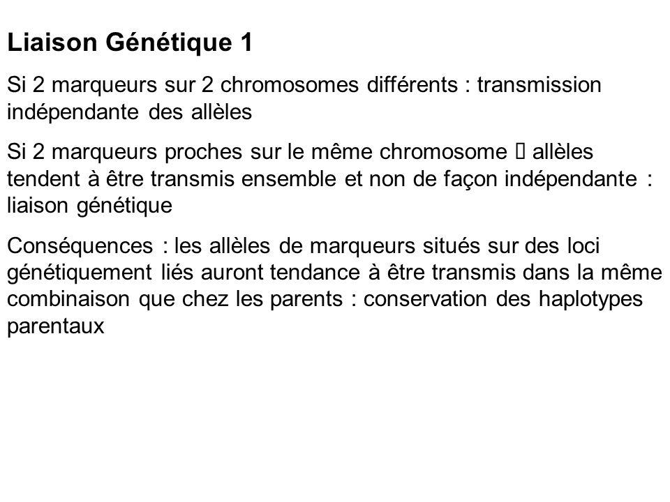Liaison Génétique 1 Si 2 marqueurs sur 2 chromosomes différents : transmission indépendante des allèles Si 2 marqueurs proches sur le même chromosome allèles tendent à être transmis ensemble et non de façon indépendante : liaison génétique Conséquences : les allèles de marqueurs situés sur des loci génétiquement liés auront tendance à être transmis dans la même combinaison que chez les parents : conservation des haplotypes parentaux
