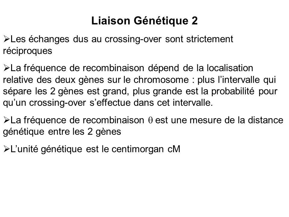 Liaison Génétique 2 Les échanges dus au crossing-over sont strictement réciproques La fréquence de recombinaison dépend de la localisation relative des deux gènes sur le chromosome : plus lintervalle qui sépare les 2 gènes est grand, plus grande est la probabilité pour quun crossing-over seffectue dans cet intervalle.