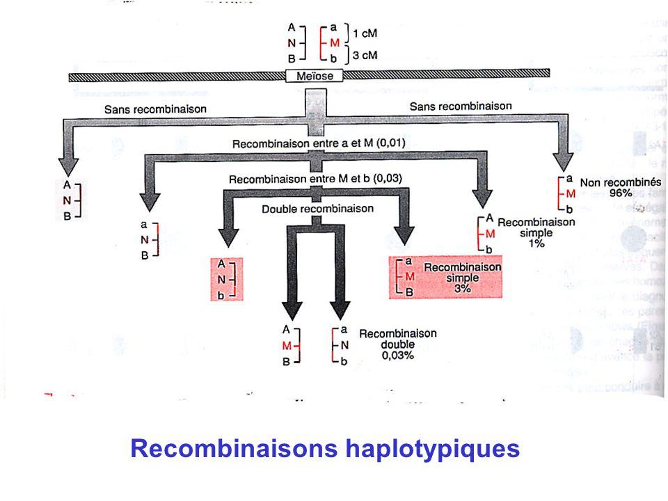 Recombinaisons haplotypiques