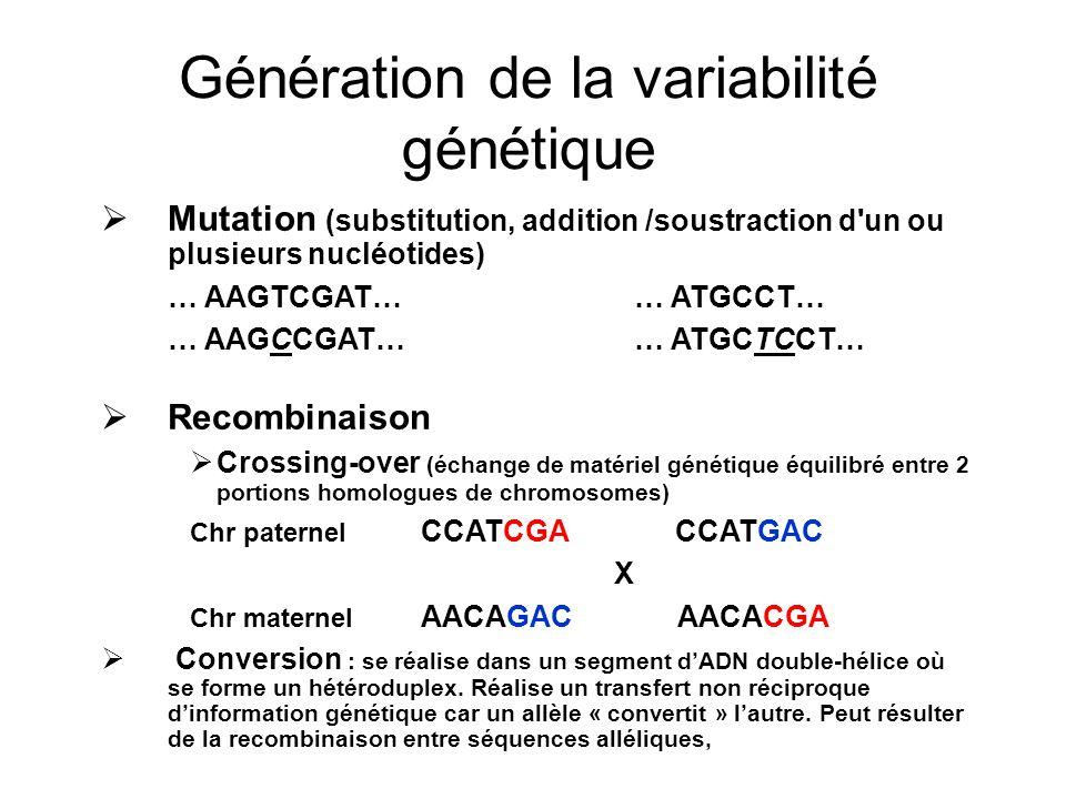 Génération de la variabilité génétique Mutation (substitution, addition /soustraction d un ou plusieurs nucléotides) … AAGTCGAT…… ATGCCT… … AAGCCGAT…… ATGCTCCT… Recombinaison Crossing-over (échange de matériel génétique équilibré entre 2 portions homologues de chromosomes) Chr paternel CCATCGA CCATGAC X Chr maternel AACAGAC AACACGA Conversion : se réalise dans un segment dADN double-hélice où se forme un hétéroduplex.