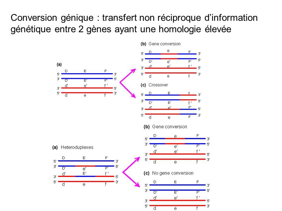 Conversion génique : transfert non réciproque dinformation génétique entre 2 gènes ayant une homologie élevée