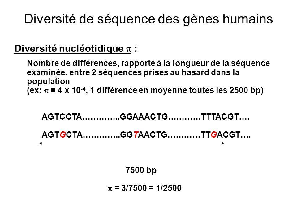 Diversité de séquence des gènes humains Diversité nucléotidique : Nombre de différences, rapporté à la longueur de la séquence examinée, entre 2 séquences prises au hasard dans la population (ex: = 4 x 10 -4, 1 différence en moyenne toutes les 2500 bp) AGTCCTA…………..GGAAACTG…………TTTACGT….