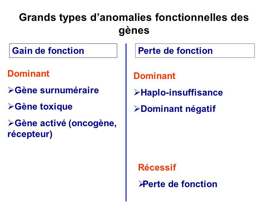 Dominant Gène surnuméraire Gène toxique Gène activé (oncogène, récepteur) Gain de fonctionPerte de fonction Dominant Haplo-insuffisance Dominant négatif Récessif Perte de fonction Grands types danomalies fonctionnelles des gènes