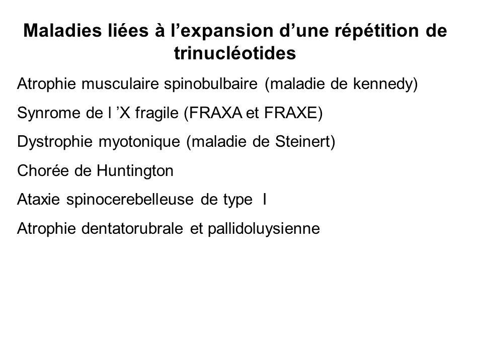 Maladies liées à lexpansion dune répétition de trinucléotides Atrophie musculaire spinobulbaire (maladie de kennedy) Synrome de l X fragile (FRAXA et FRAXE) Dystrophie myotonique (maladie de Steinert) Chorée de Huntington Ataxie spinocerebelleuse de type I Atrophie dentatorubrale et pallidoluysienne