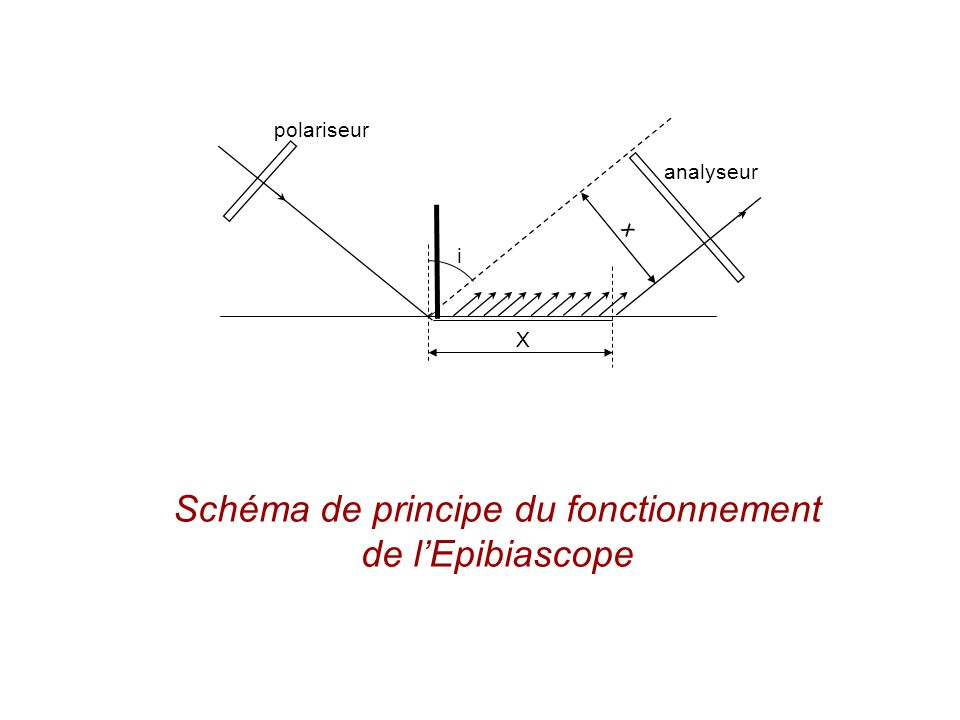 X i x analyseur polariseur Schéma de principe du fonctionnement de lEpibiascope