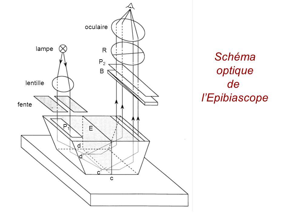 lampe lentille fente P1P1 E d d c c B P2P2 R oculaire figure 13 Schéma optique de lépibiascope Schéma optique de lEpibiascope