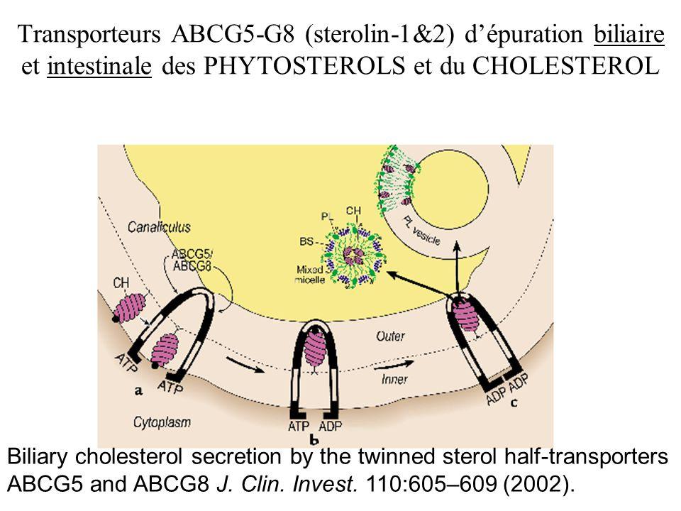 Transporteurs ABCG5-G8 (sterolin-1&2) dépuration biliaire et intestinale des PHYTOSTEROLS et du CHOLESTEROL Biliary cholesterol secretion by the twinn