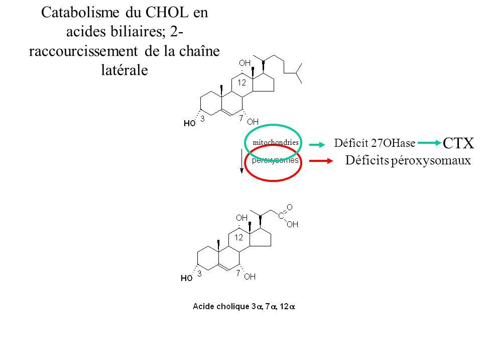 Catabolisme du CHOL en acides biliaires; 2- raccourcissement de la chaîne latérale Déficits péroxysomaux mitochondries Déficit 27OHase CTX