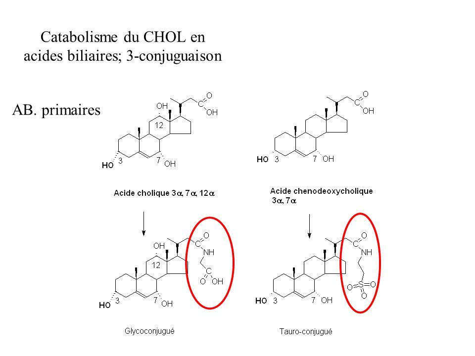 Catabolisme du CHOL en acides biliaires; 3-conjuguaison AB. primaires