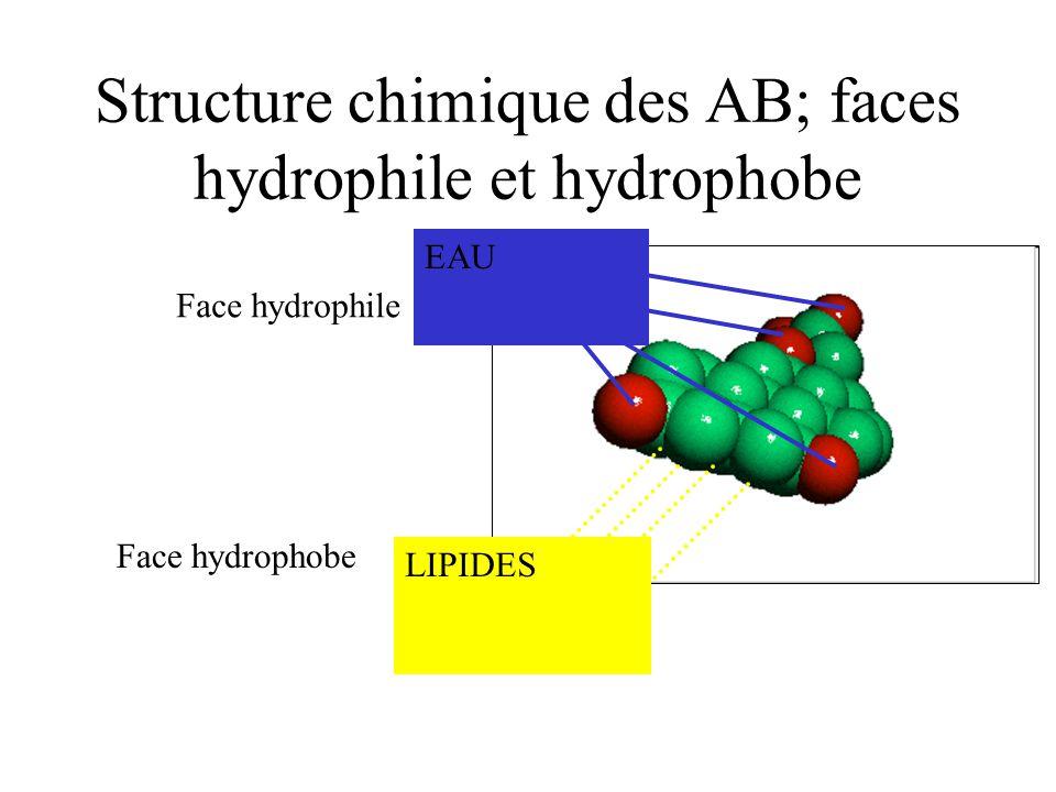 Structure chimique des AB; faces hydrophile et hydrophobe Face hydrophile Face hydrophobe LIPIDES EAU