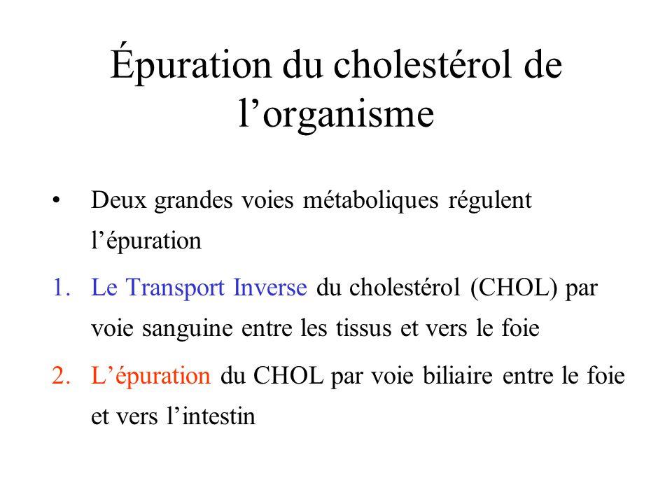 Épuration du cholestérol de lorganisme Deux grandes voies métaboliques régulent lépuration 1.Le Transport Inverse du cholestérol (CHOL) par voie sangu