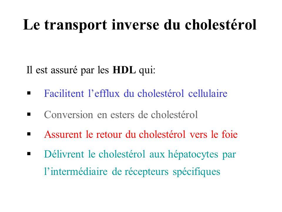 Le transport inverse du cholestérol Il est assuré par les HDL qui: Facilitent lefflux du cholestérol cellulaire Conversion en esters de cholestérol As