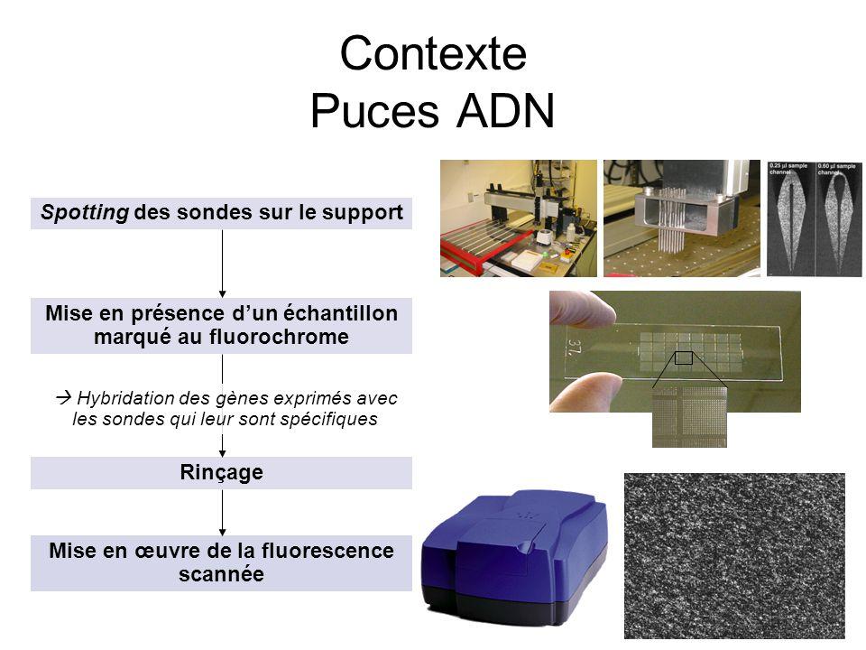 18 Contexte Puces ADN Spotting des sondes sur le support Mise en présence dun échantillon marqué au fluorochrome Rinçage Mise en œuvre de la fluoresce