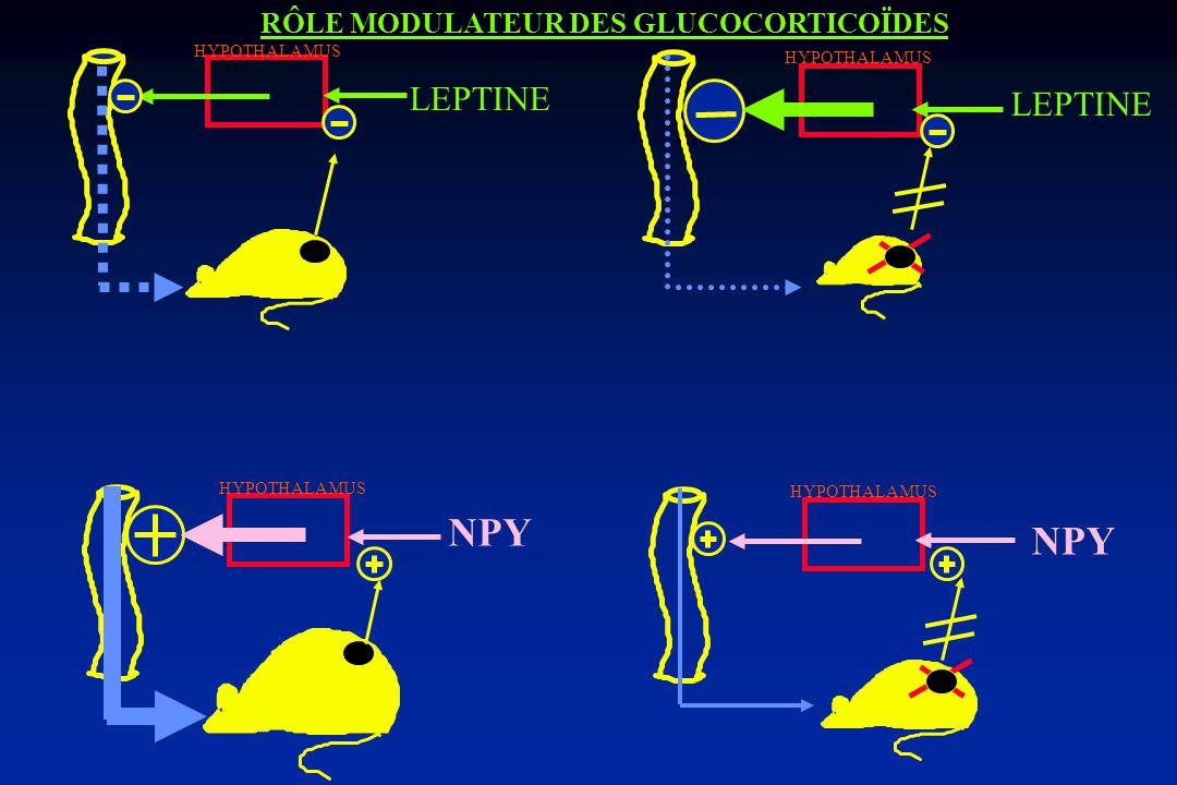 POMC AGRP MC4 -R MSH fat/fat CPE AGOUTI Ay PC1