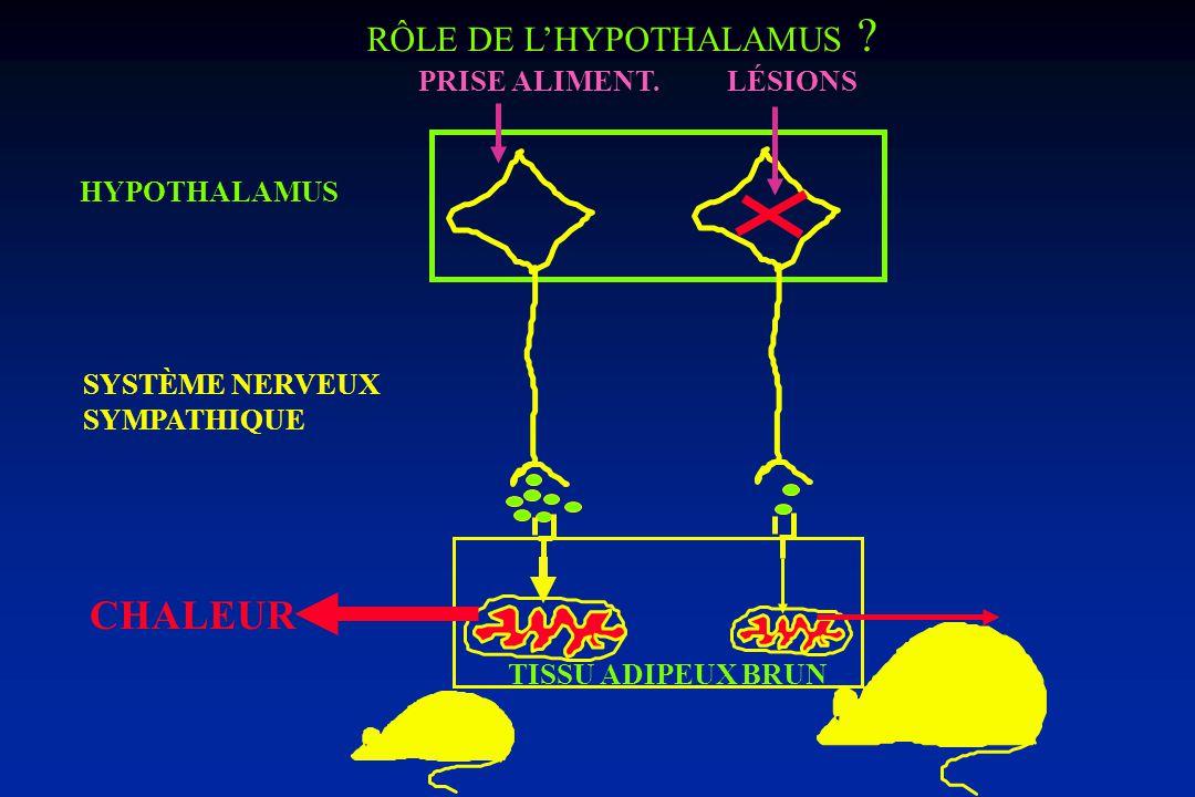 CONTRÔLE DES DÉPENSES ÉNERGÉTIQUES Nutriments Tissu adipeux TISSUS (Métab.cellul.) Apports énergétiques Dépenses énergétiques TG MÉTABOLISME BASAL THE