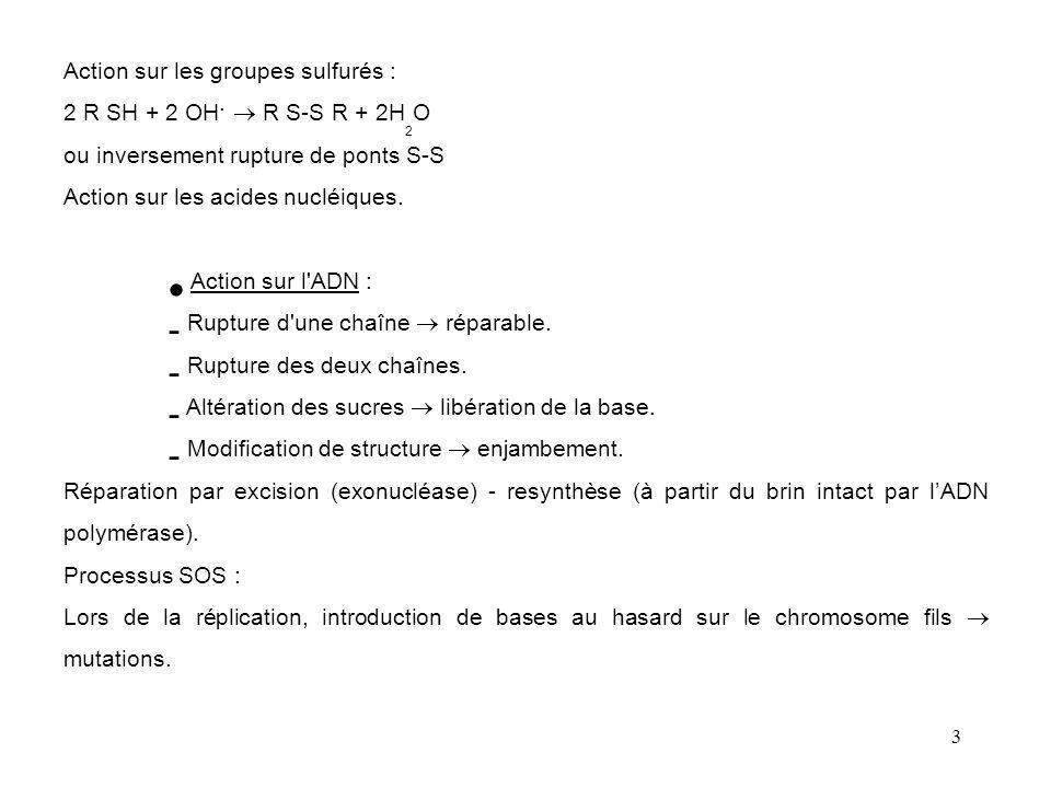 3 Action sur les groupes sulfurés : 2 R SH + 2 OH.