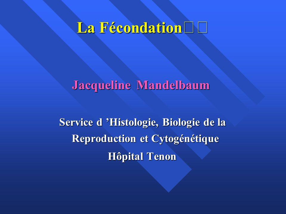 La Fécondation Jacqueline Mandelbaum Jacqueline Mandelbaum Service d Histologie, Biologie de la Service d Histologie, Biologie de la Reproduction et C