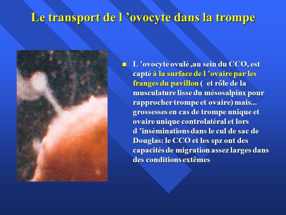 Le transport de l ovocyte dans la trompe L ovocyte ovulé,au sein du CCO, est capté à la surface de l ovaire par les franges du pavillon ( et rôle de l
