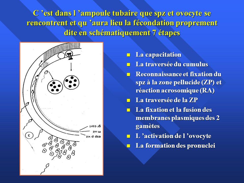 C est dans l ampoule tubaire que spz et ovocyte se rencontrent et qu aura lieu la fécondation proprement dite en schématiquement 7 étapes La capacitat