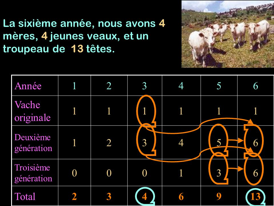 Année123456 Vache originale 111111 Deuxième génération 123456 Troisième génération 000136 Total2346913 La sixième année, nous avons 4 mères, 4 jeunes