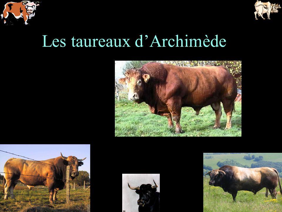 Les taureaux dArchimède
