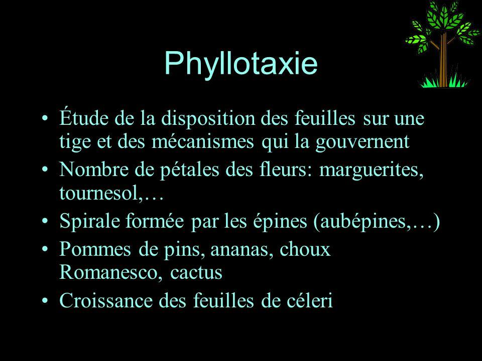 Phyllotaxie Étude de la disposition des feuilles sur une tige et des mécanismes qui la gouvernent Nombre de pétales des fleurs: marguerites, tournesol