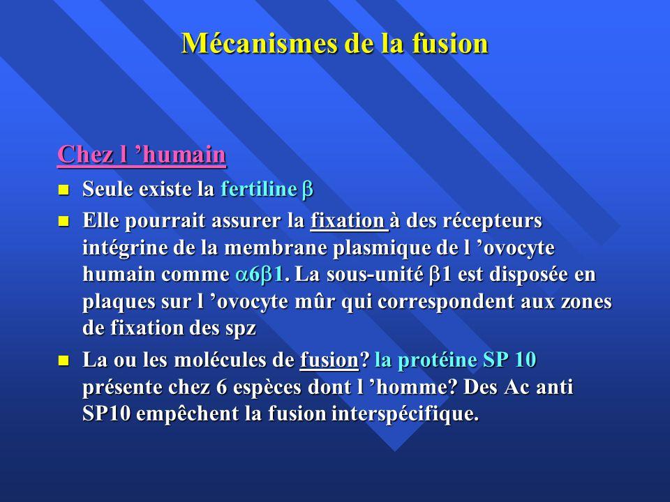 Mécanismes de la fusion Chez l humain Seule existe la fertiline Seule existe la fertiline Elle pourrait assurer la fixation à des récepteurs intégrine de la membrane plasmique de l ovocyte humain comme 6 1.