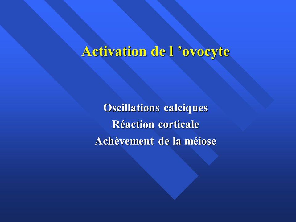 Activation de l ovocyte Oscillations calciques Réaction corticale Achèvement de la méiose