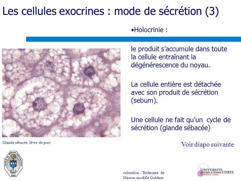 Holocrinie : le produit saccumule dans toute la cellule entraînant la dégénérescence du noyau. La cellule entière est détachée avec son produit de séc
