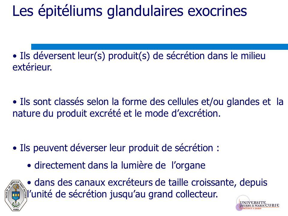 Les épitéliums glandulaires exocrines Ils déversent leur(s) produit(s) de sécrétion dans le milieu extérieur. Ils sont classés selon la forme des cell