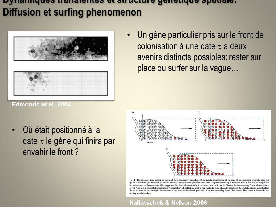 Dynamiques transientes et structure génétique spatiale: Diffusion et surfing phenomenon Un gène particulier pris sur le front de colonisation à une da