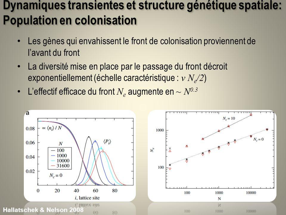 Dynamiques transientes et structure génétique spatiale: Population en colonisation Les gènes qui envahissent le front de colonisation proviennent de l