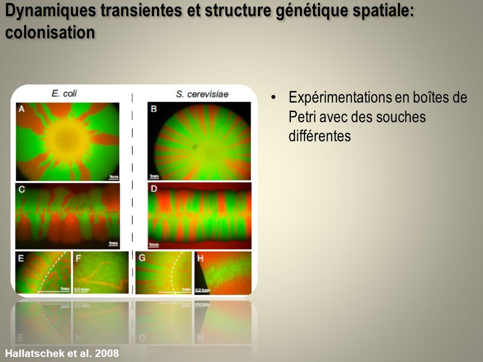 Dynamiques transientes et structure génétique spatiale: colonisation Expérimentations en boîtes de Petri avec des souches différentes Hallatschek et a