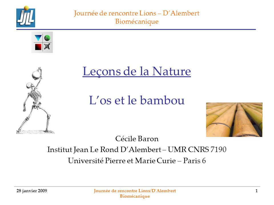 28 janvier 2009 Journée de rencontre Lions/D'Alembert Biomécanique 1 Leçons de la Nature Los et le bambou Cécile Baron Institut Jean Le Rond DAlembert