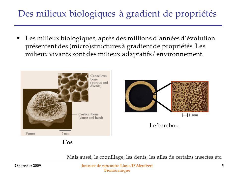 28 janvier 2009 Journée de rencontre Lions/D'Alembert Biomécanique 3 Des milieux biologiques à gradient de propriétés Les milieux biologiques, après d
