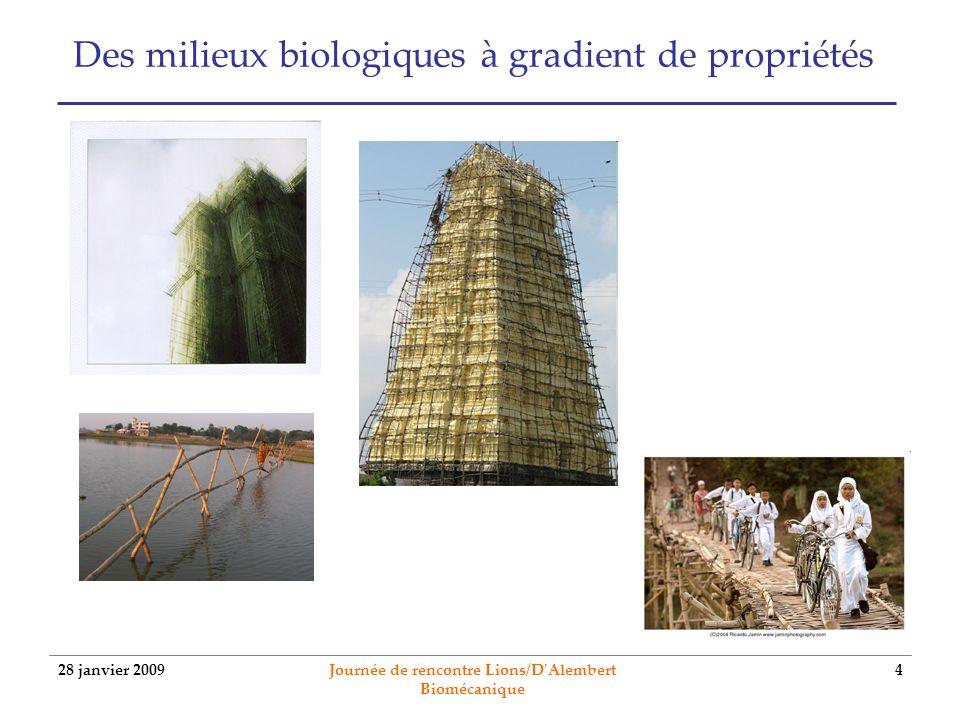 28 janvier 2009 Journée de rencontre Lions/D'Alembert Biomécanique 4 Des milieux biologiques à gradient de propriétés
