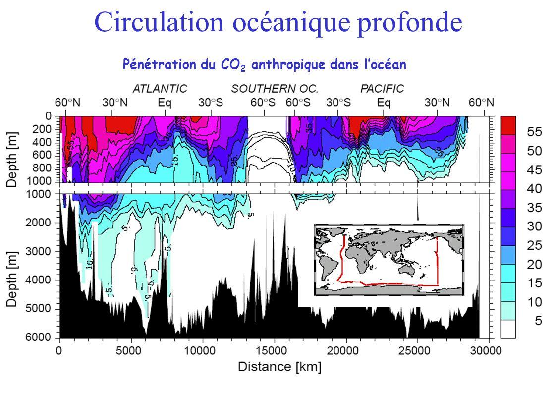 Pénétration du CO 2 anthropique dans locéan Circulation océanique profonde