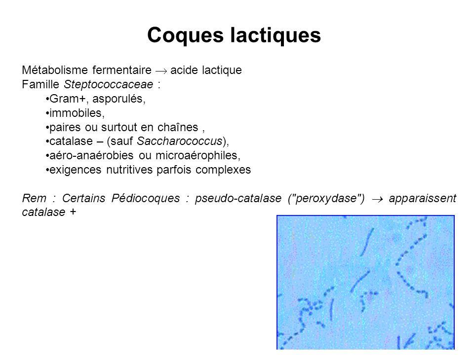 Coques lactiques Métabolisme fermentaire acide lactique Famille Steptococcaceae : Gram+, asporulés, immobiles, paires ou surtout en chaînes, catalase