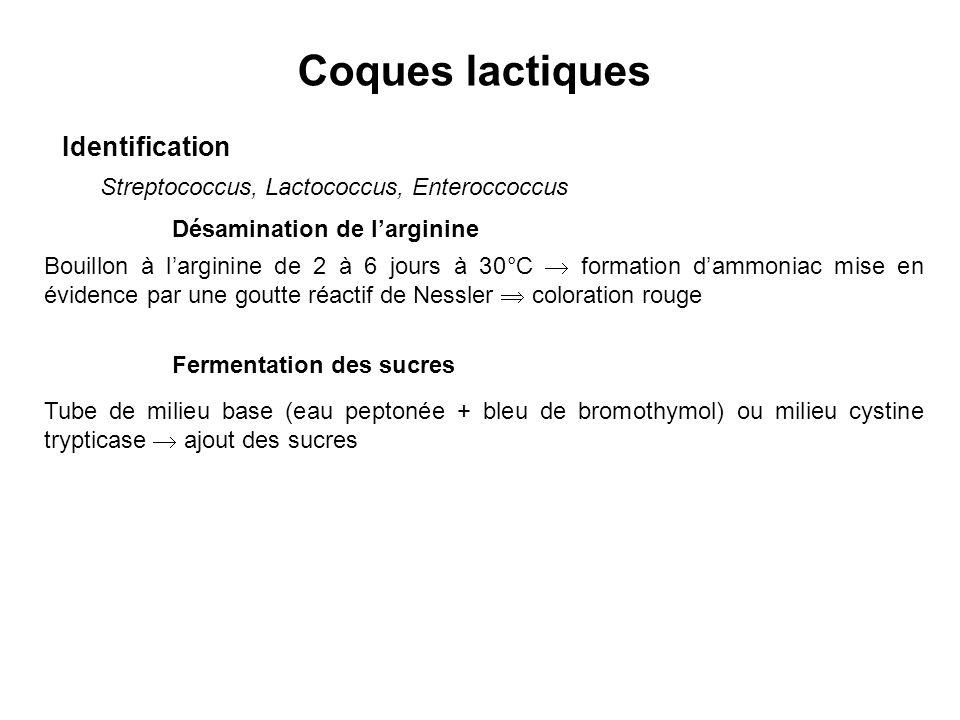 Coques lactiques Identification Streptococcus, Lactococcus, Enteroccoccus Désamination de larginine Bouillon à larginine de 2 à 6 jours à 30°C formati