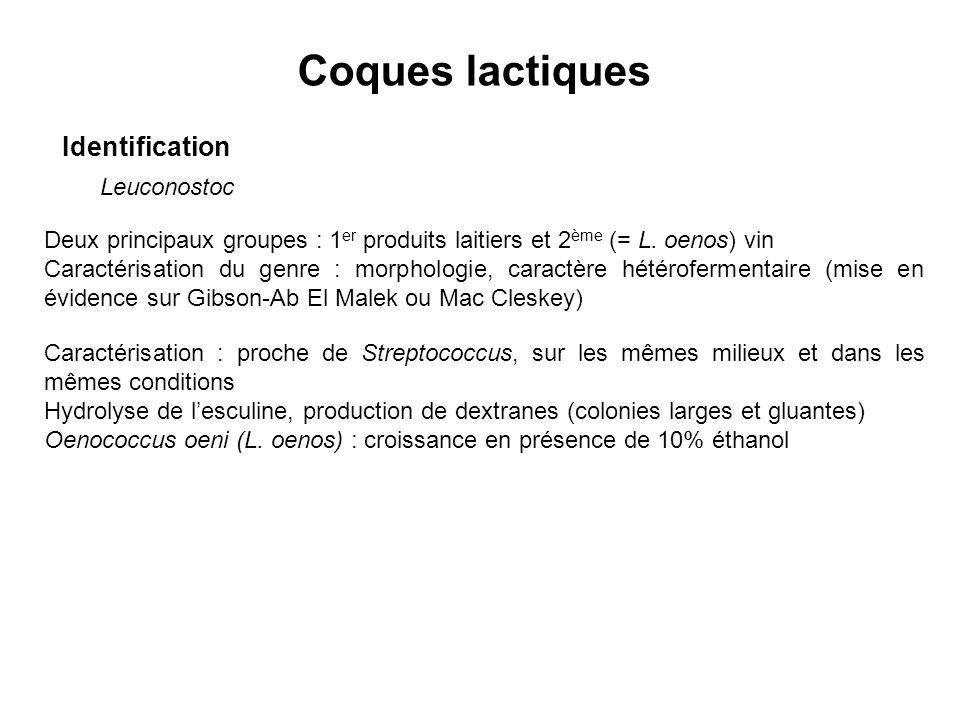 Coques lactiques Identification Leuconostoc Deux principaux groupes : 1 er produits laitiers et 2 ème (= L. oenos) vin Caractérisation du genre : morp
