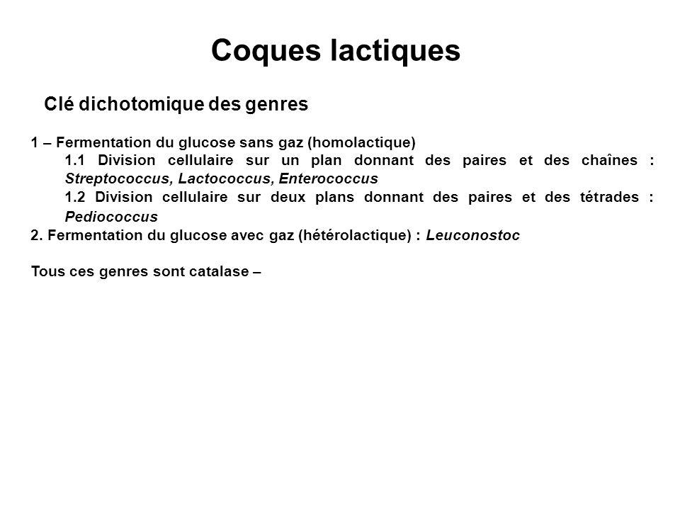 Coques lactiques Clé dichotomique des genres 1 – Fermentation du glucose sans gaz (homolactique) 1.1 Division cellulaire sur un plan donnant des paires et des chaînes : Streptococcus, Lactococcus, Enterococcus 1.2 Division cellulaire sur deux plans donnant des paires et des tétrades : Pediococcus 2.