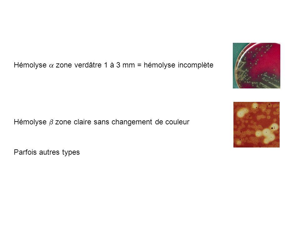 Hémolyse zone verdâtre 1 à 3 mm = hémolyse incomplète Hémolyse zone claire sans changement de couleur Parfois autres types