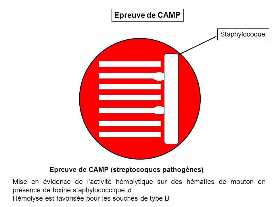 Staphylocoque Epreuve de CAMP Epreuve de CAMP (streptocoques pathogènes) Mise en évidence de lactivité hémolytique sur des hématies de mouton en présence de toxine staphylococcique Hémolyse est favorisée pour les souches de type B