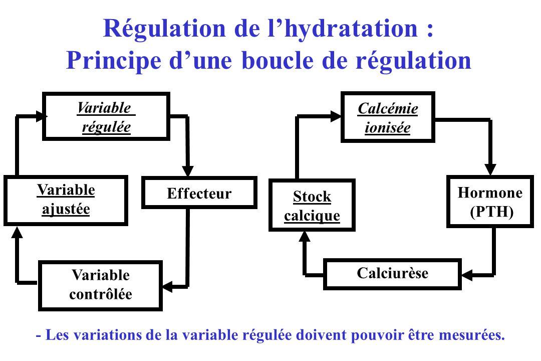 Variable ajustée Effecteur Variable régulée Calciurèse Hormone (PTH) Calcémie ionisée Régulation de lhydratation : Principe dune boucle de régulation - Les variations de la variable régulée doivent pouvoir être mesurées.