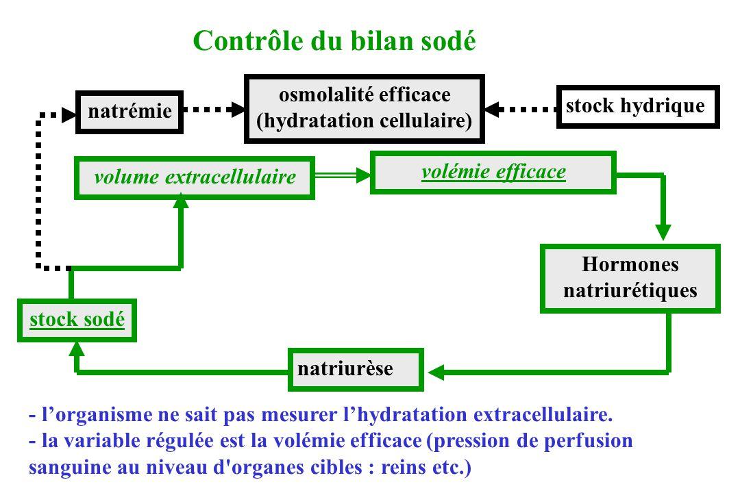 natriurèse Hormones natriurétiques volume extracellulaire volémie efficace stock sodé osmolalité efficace (hydratation cellulaire) natrémie Contrôle d